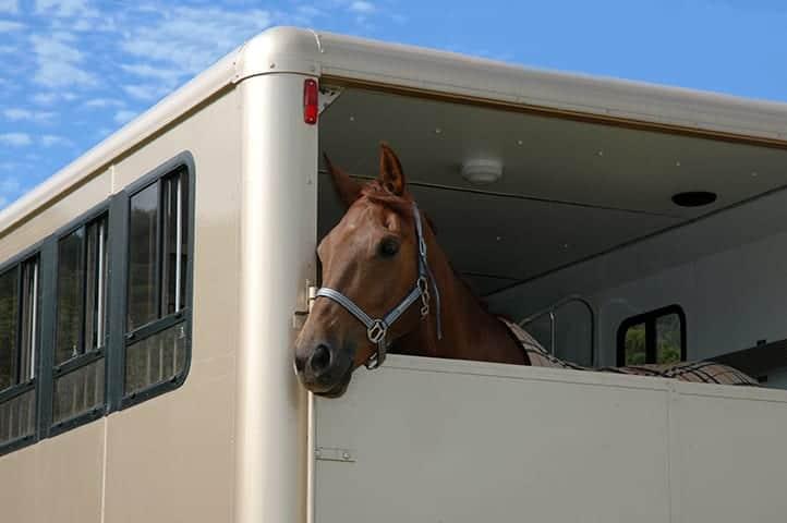 Horsebox Insurance