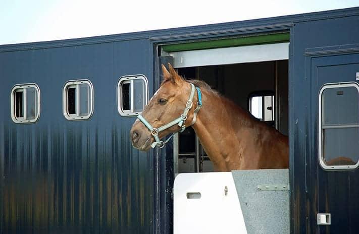 Motorised Horsebox Insurance