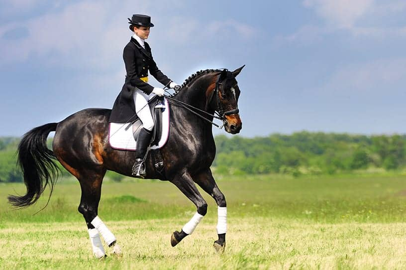 Best UK Equestrian Events